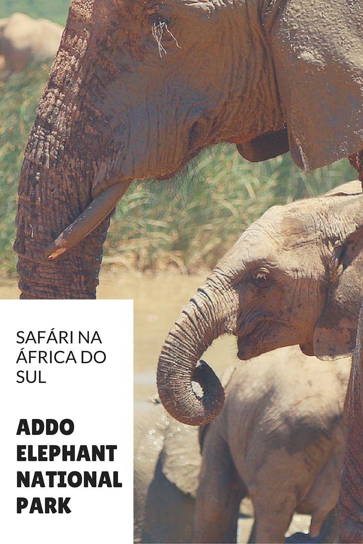 Pensando em um safari na África do Sul? Existem bastantes opções, mas se você quer um lugar de fácil acesso e com muitos elefantes, vá para o destino certo:
