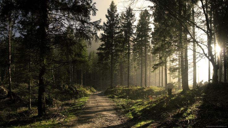 sunny-forest-road.jpg (2560×1440)