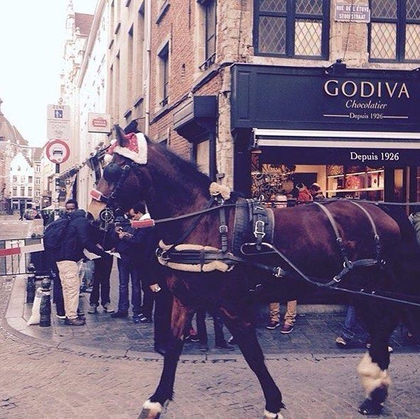 Oh so Cutewanna ride on this horse!  #Brussels #Belgium #Europe #travel #travelblogger #blogger #beautiful #love #adventure #travellikedance #gopro #sponsorship #street #Christmas #beautifulplace #amor #night #ベルギー #ヨーロッパ #horse #animal #godiva #chocolate #sns