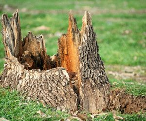 13 Best Tree Stump Solutions Images On Pinterest Tree