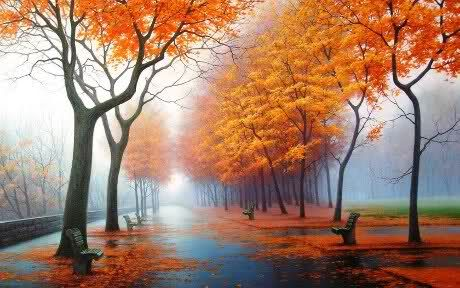 some autumn trees