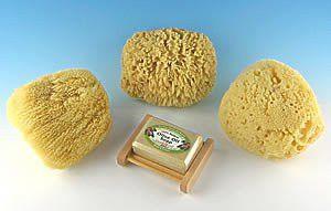 """SeaSationals™ Natural Sea Sponge Sampler (5""""-6"""" Adult Bath Sized Sponges)"""
