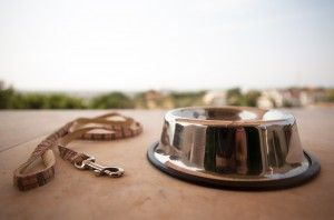 According to CBS News and Money Magazine, more and more companies are offering pet bereavement leave to their employees.