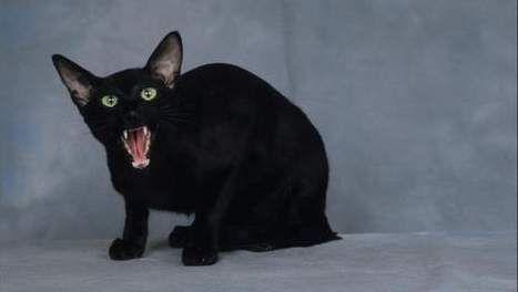 Katten zijn best lief, en zwarte katten ook dus ik weet eigenlijk niet waarom het nou eng is (zeker omdat ze ongeluk brengen...)