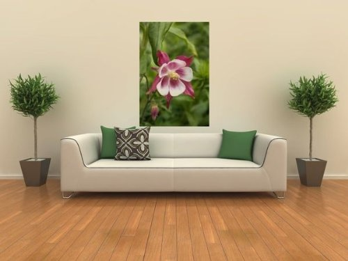 Columbine - Peel and Stick Wall Decal by Wallmonkeys