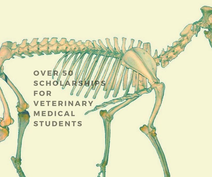 Over 50 Veterinary School Scholarships listed here. Scholarships and free money for Veterinary residents and students.