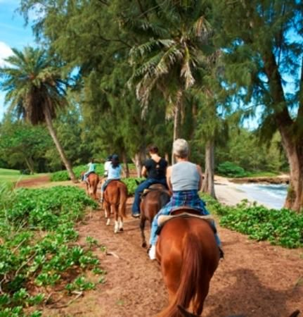 Turtle Bay Resort Horse Riding - Oahu