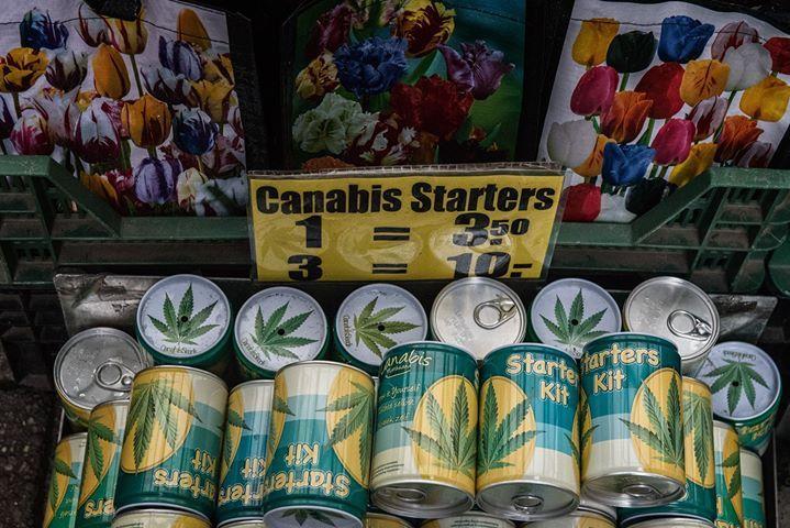 Irgendwo muss es ja herkommen. Blumenmarkt in Amsterdam.