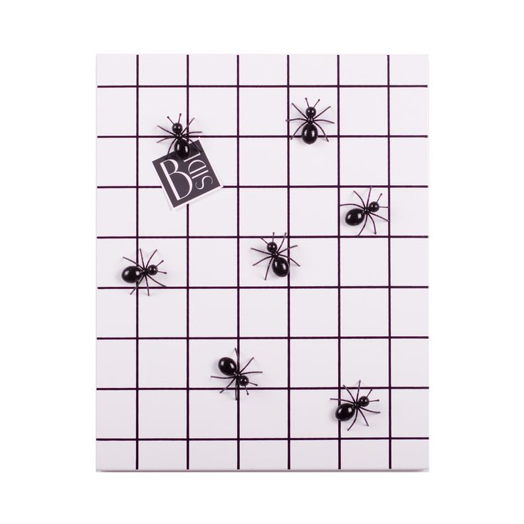 Wall mounted grid display with ant magnets