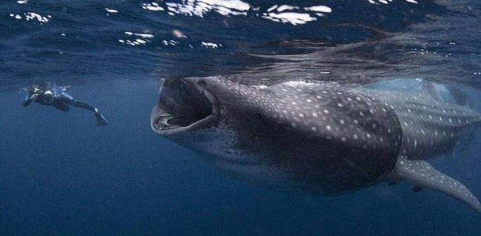 The Hidden Science & Facts Behind Thalassophobia