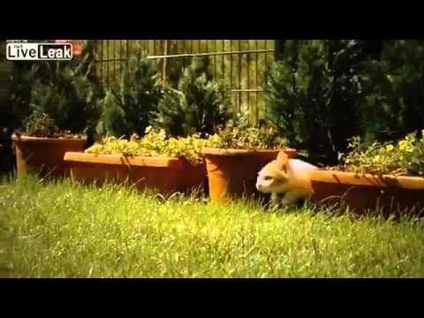 Kitten filmed playing in slow motion