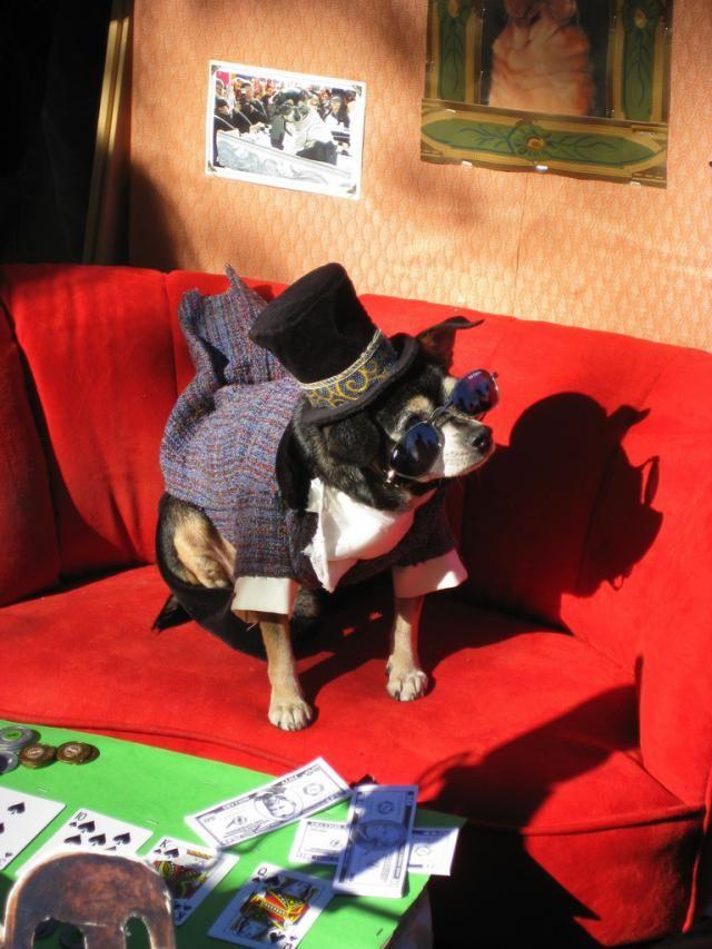Top 6 NYC Halloween Costume Shops: Frankie Steinz