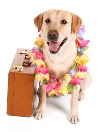 The AeroPets company team helps to shipping your pets with carefully anywhere. Our company customize and assist with all of the details of your pets move national, international pet travel. If you need any information about shipping Please contact us.