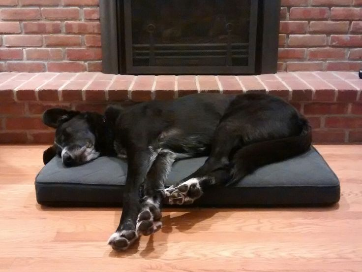 Irish wolfhound black lab has bed covered.