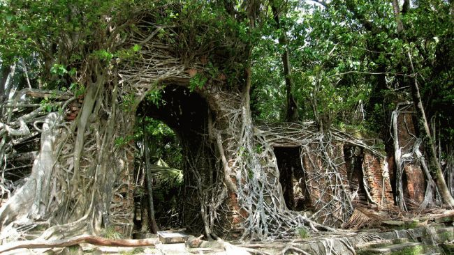 Trees take over an abandoned building in Ross Island in the Andaman Islands, India. The island was once the headquarters of the Indian Penal Settlement, and was later abandoned due to a 1941 earthquake, and the invasion of the Japanese.