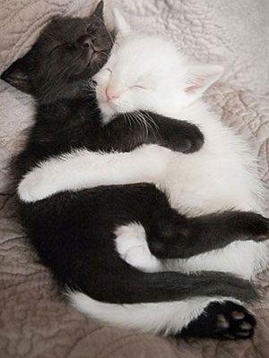 Zwart witte knuffel