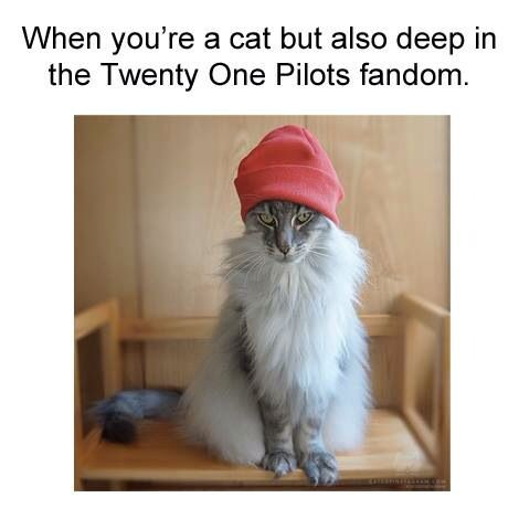 """Don't even get me (Cadence Blatter not youu) wrong okay I've been listening to TØP since 2012 so don't even say """"Oh I love 21p especially stressed out"""" oKAY LEAVE"""