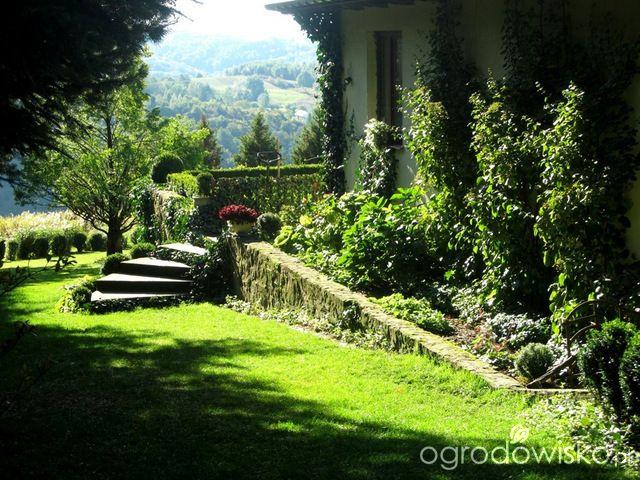O....! - strona 491 - Forum ogrodnicze - Ogrodowisko