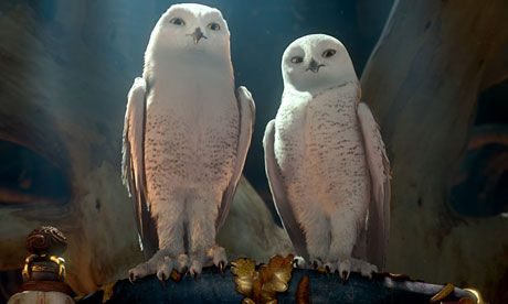 legend of the guardians owl images | Legend of the Guardians: The Owls of Ga'Hoole – review | Film | The ...