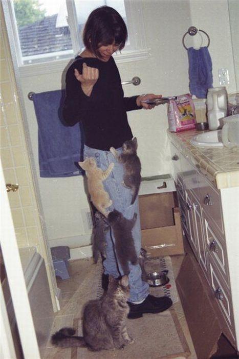 Картинки смешные котята