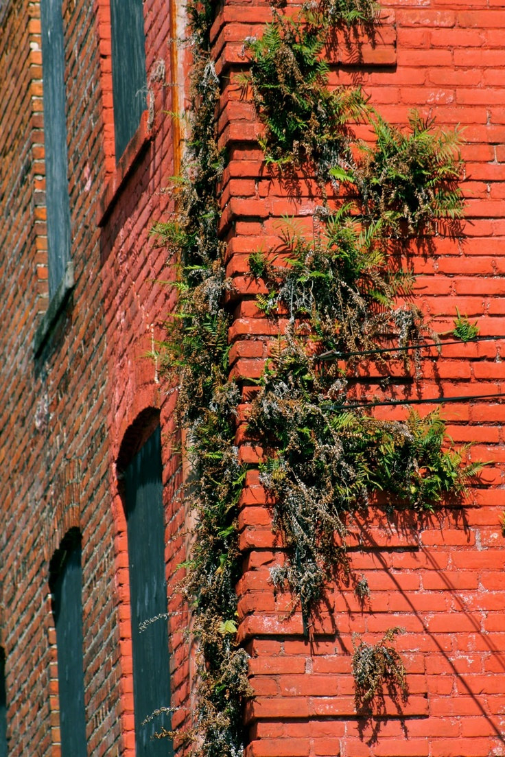 Native Plants for Walls and Roofs