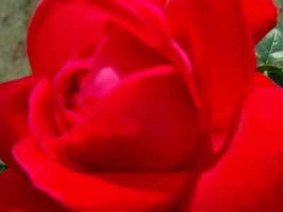 #redredred