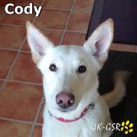 Cody for adoption