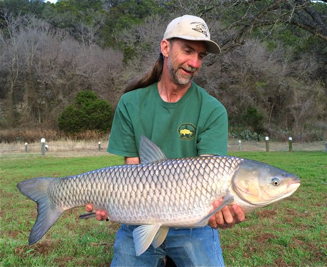 Pin by Wayne Boon on Grass Carp Photos - some of my more ...
