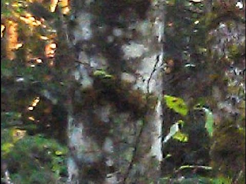 Meet the Family, an entire family or clan of Sasquatches!   BigfootBlogger.Com