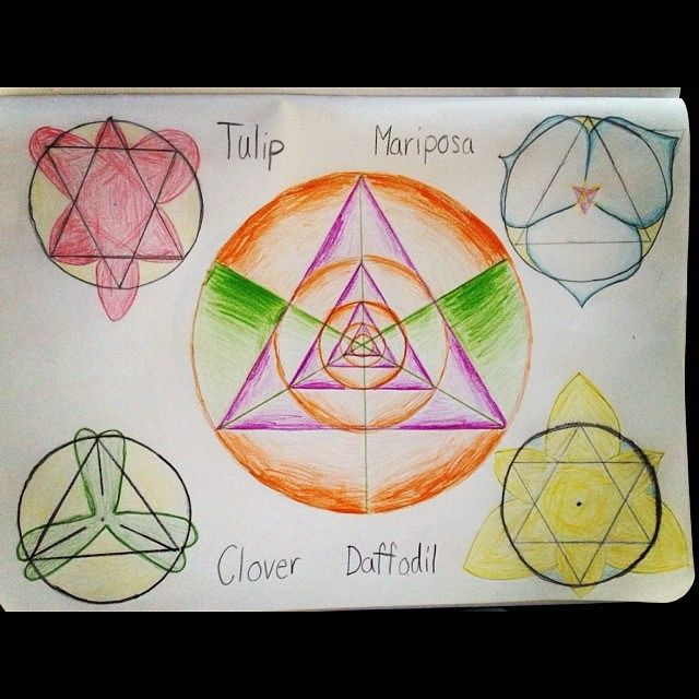 Triangles from circles, as related to patterns of 3 and 6-petaled flowers in nature.  Syrendell Waldorf homeschooling geometry and botany. www.syrendell.com