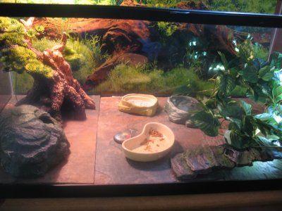 The 25 Best Gecko Terrarium Ideas On Pinterest Reptile Enclosure Reptile Terrarium And