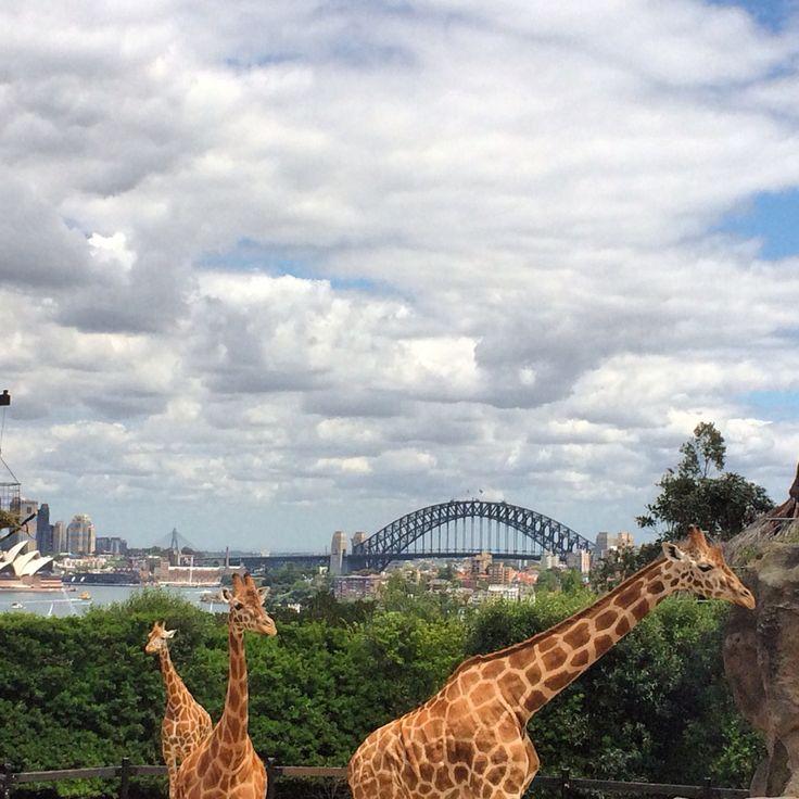 Taronga Zoo #australia