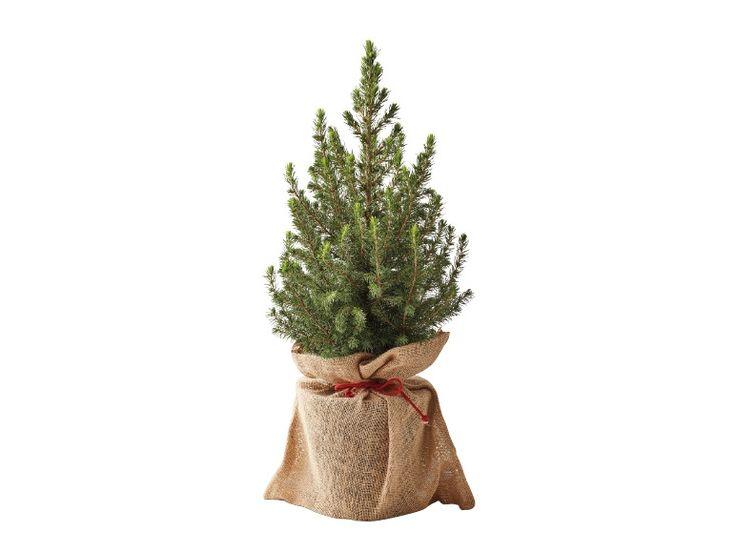 Christmas Tree - Thursday, 01.12. - Lidl UK