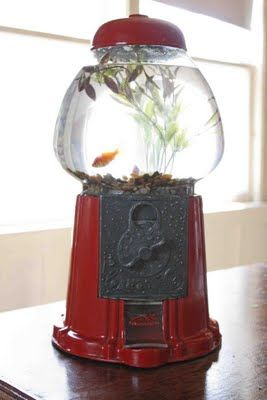 This is a gumball machine turned into a fishbowl.  No, really, it is!  Awesome DIY upcycle, from Or So She Says...
