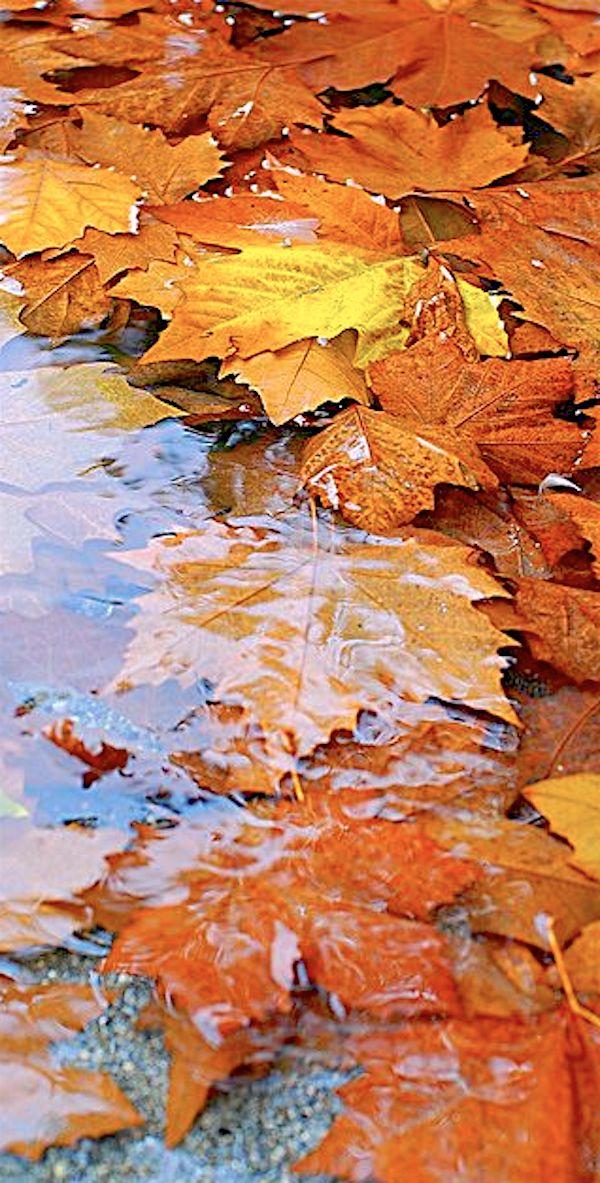 | October | Autumn Rain