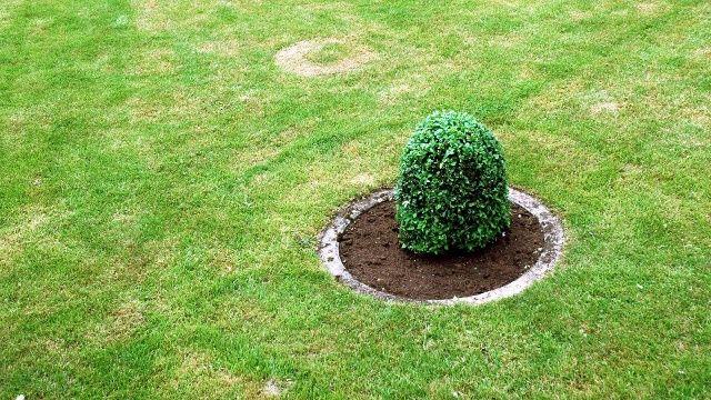 Rasen Saen Darum Sollten Sie Den Samensack Schutteln In 2021 Saen Rasen Richtig Saen Rasen