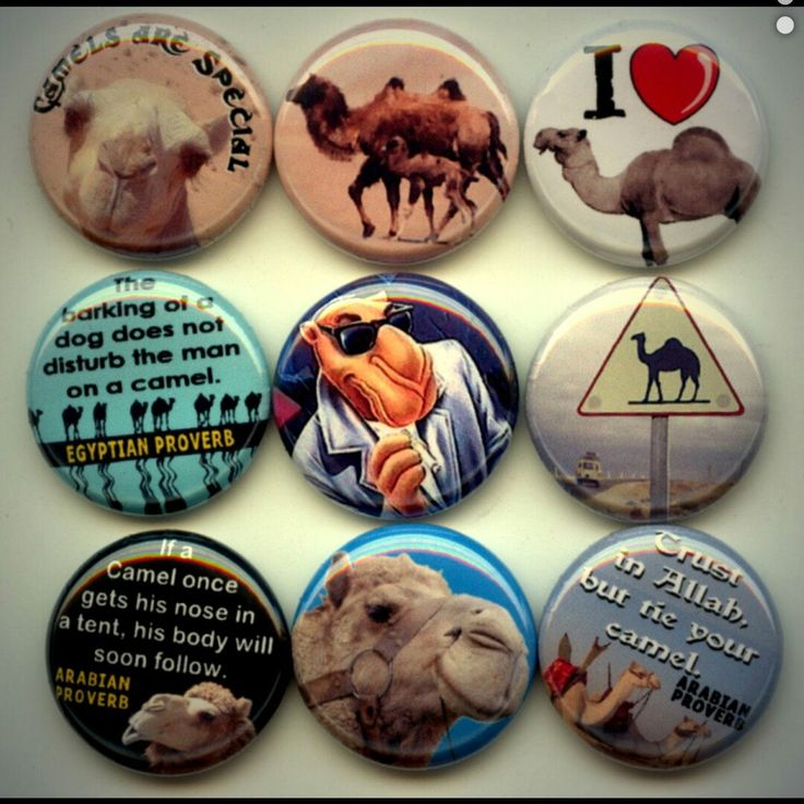 Camel Expert I Love Camels   pinback button set by Yesware11 on Etsy.. Click for details!