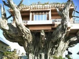 A real tree house. Smile