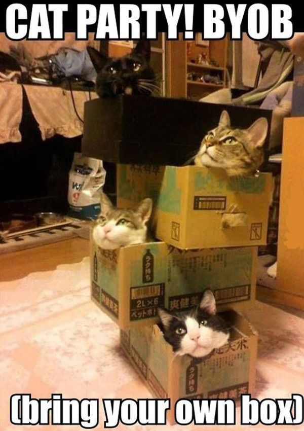 Cat Party, Bring Your Own Box,  Click the link to view today's funniest pictures!