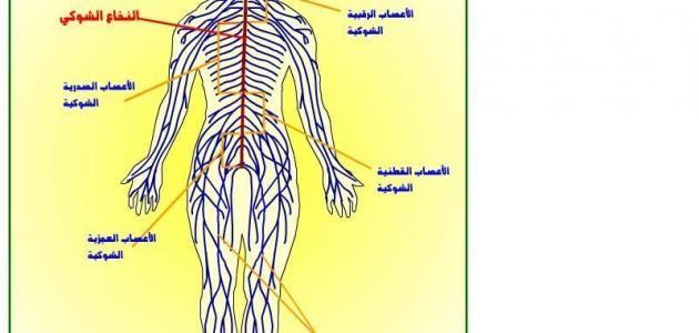 تعريف ومكونات الجهاز العصبي Nervous System Function Nervous System Nervous