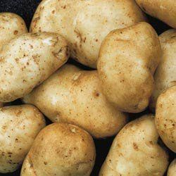 Kennebec Potato By Henry Field's Seed & Nursery