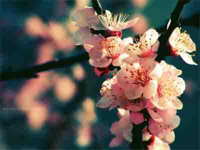 23 Beautiful Spring Wallpapers You Can Download for Free: Spring Rhapsody by Augustrush008