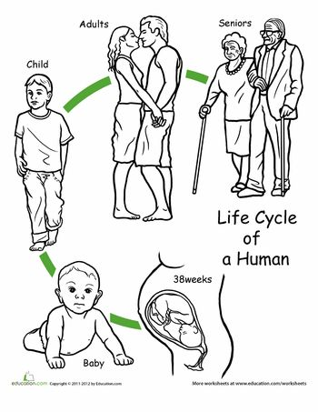 Worksheets: Color the Life Cycle: Human