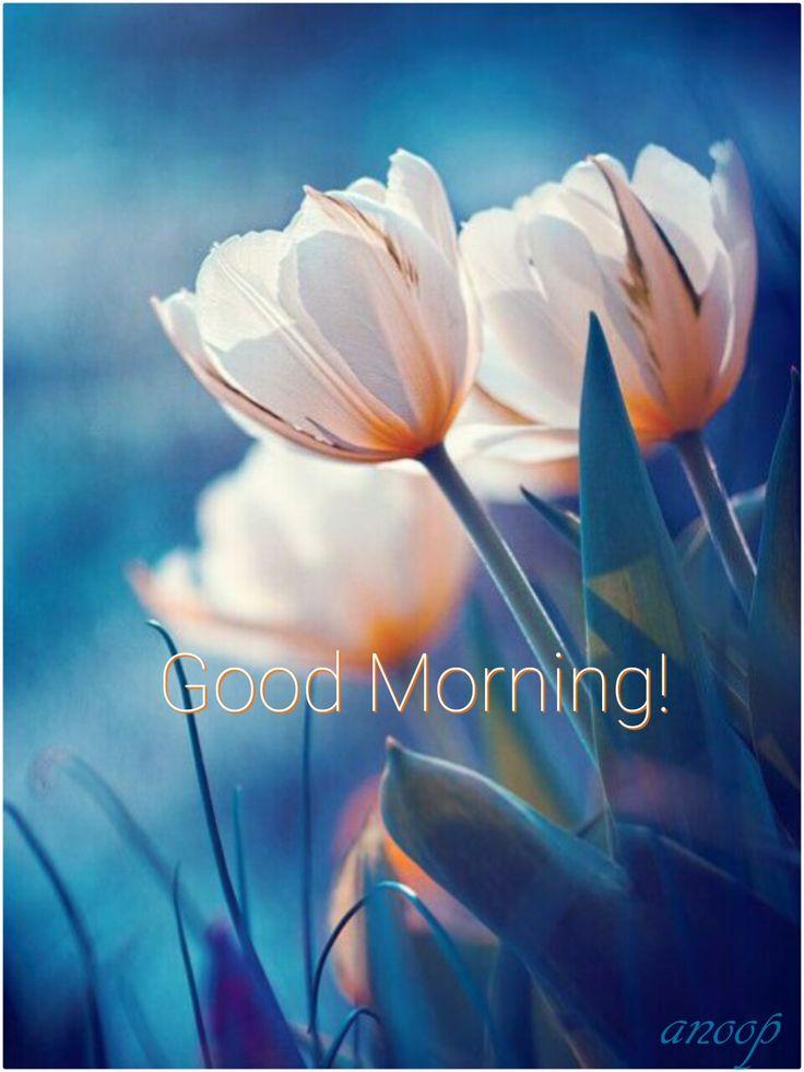 Good morning beautiful ❤️