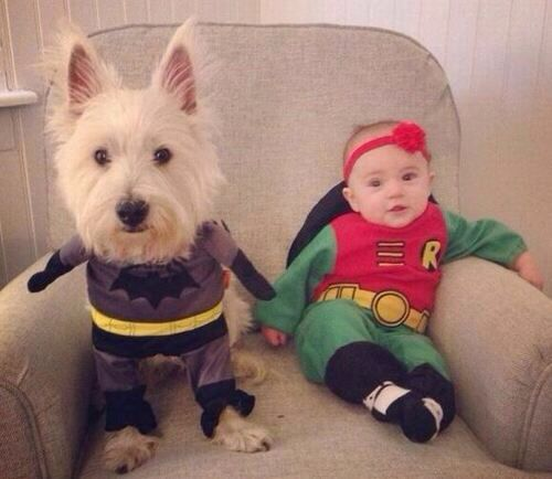 Baby in robin outfit  Dog in batman outfit