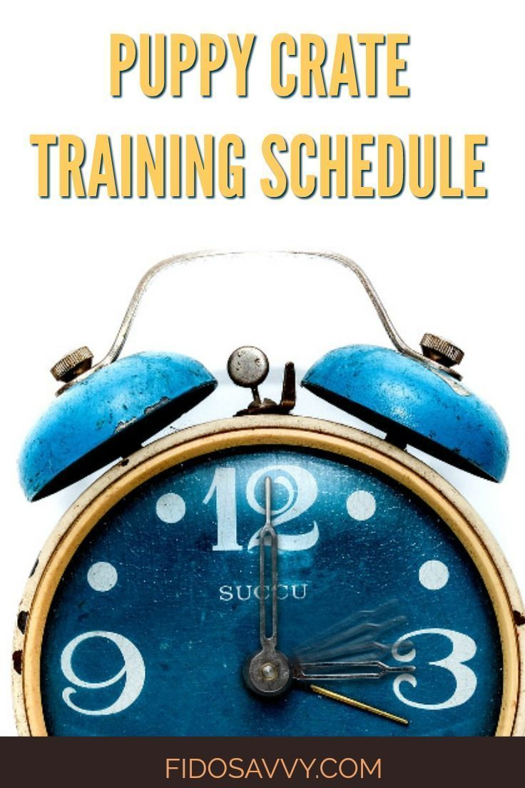 Puppy Crate Training Schedule Potty Training Puppy Crate