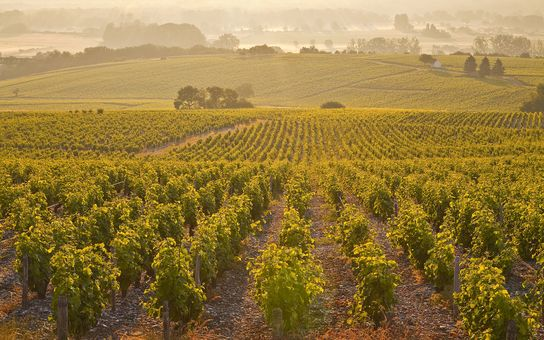 Travel + Leisure guide to Chilean wine country