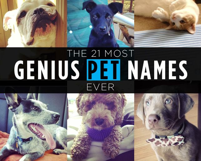 The 21 Most Genius Pet Names Ever ~ You'll be impressed with this serious show of canine (and feline) creativity.