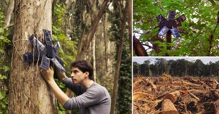 El invento de un joven usa teléfonos celulares viejos para la lucha contra la tala ilegal en el Amazonas