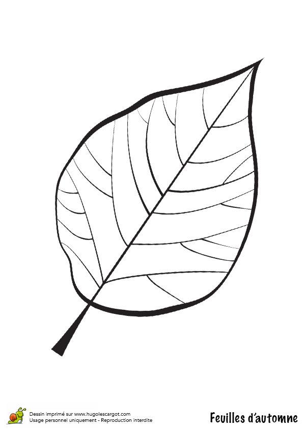 Coloriage / dessin feuilles automne noyer